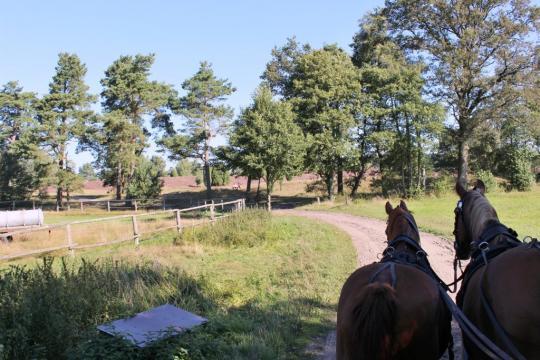 Kutschfahrten durch die Heide