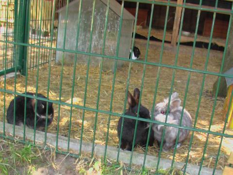 Zwergkaninchen im Streichelzoo auf dem Haflinger-Ferienhof Hamburg