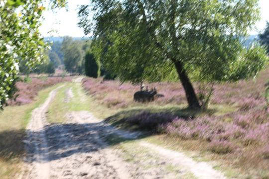 Wandern und Radfahren in der Heide